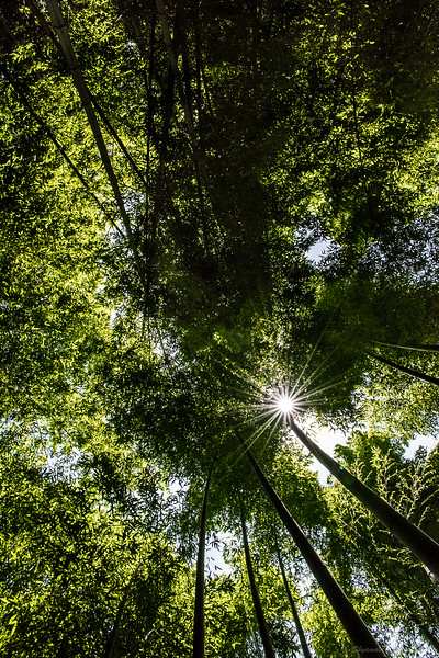 The only way to get away from the crowds in the bamboo forest...look up.