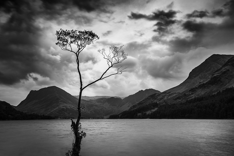 That Tree Buttermere