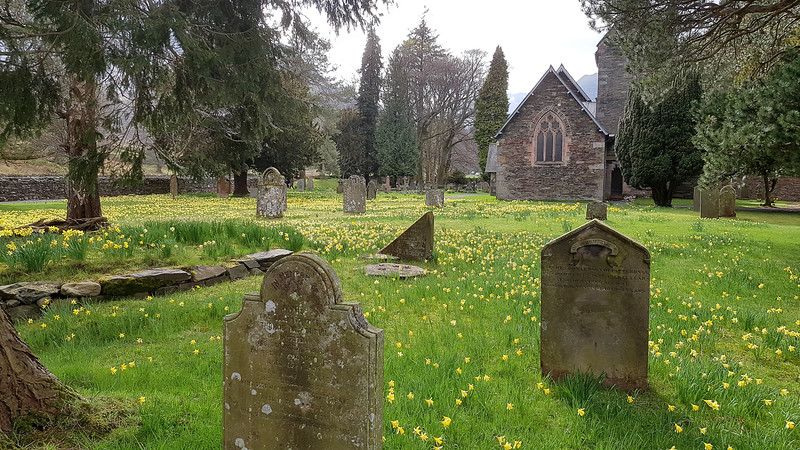 On the lake side walk from Glenridding to Patterdale this churchyard with a carpet of Daffodils caught the eye