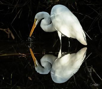 Splash with reflection