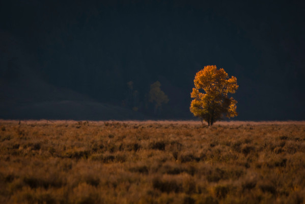 Lone Tree, Tetons