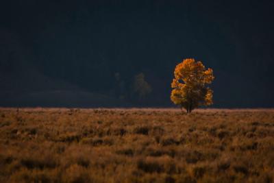Lone Tree, Tetons
