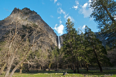 Bridalveil Fall from the Meadow