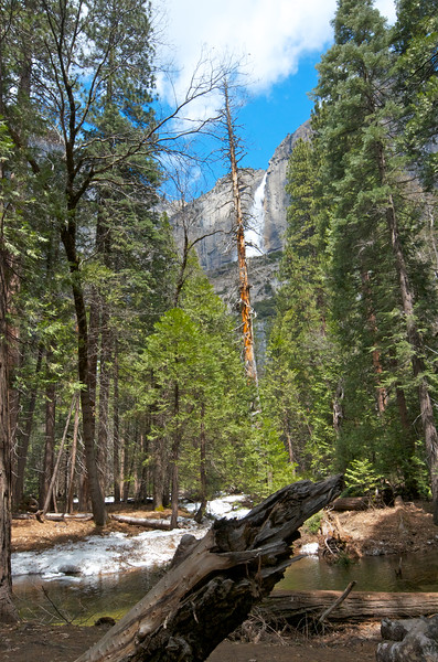 Yosemite Falls from a Valley Stream