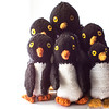 A group of penguins at Walrus Bay
