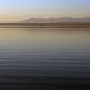 Pelican swims in the Salton Sea.