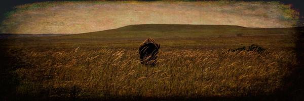 Tallgrass Prairie Revisited