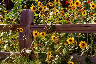 Flowers in Utah