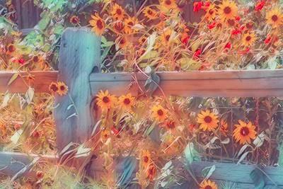 Dreams of Blooms