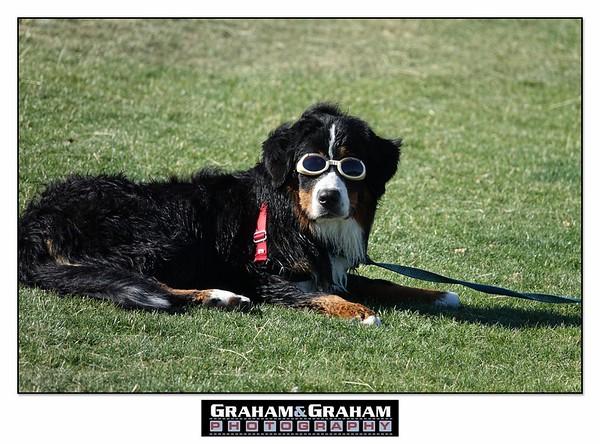 Goggle wearing pup at picnic