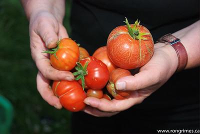 Lottie's Harvest