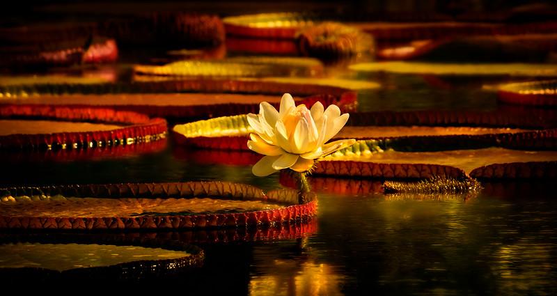 The Lily Pond 7.jpg