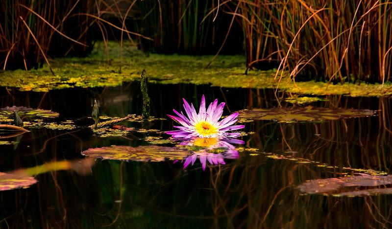 The Lily Pond 104.jpg