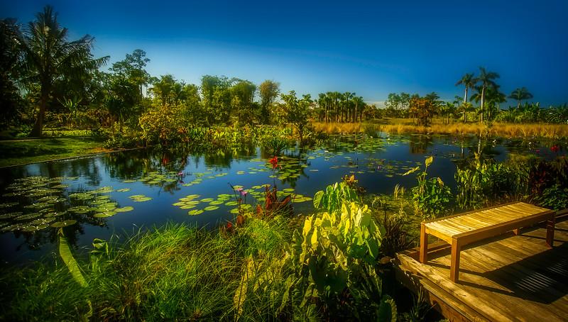 The Lily Pond 3.jpg