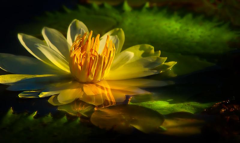 The Lily Pond 97.jpg