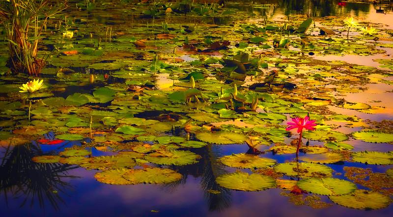 The Lily Pond 73.jpg