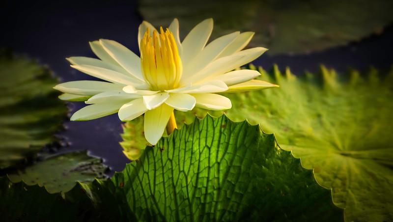 The Lily Pond 94.jpg