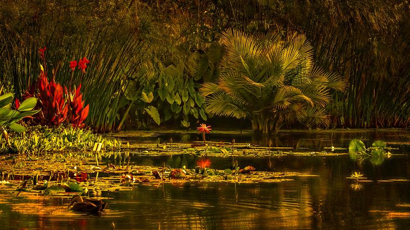 The Lily Pond 60.jpg