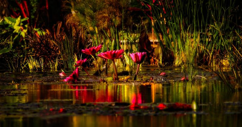 The Lily Pond 47.jpg