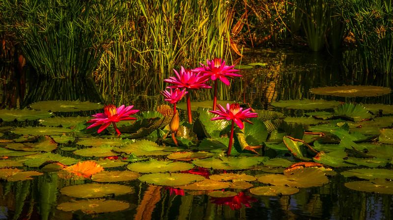 The Lily Pond 5.jpg
