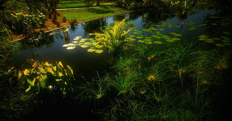 The Lily Pond 30.jpg