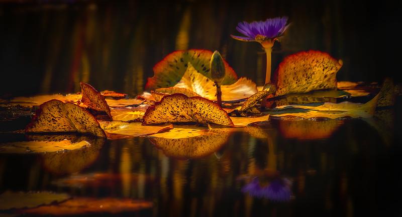 The Lily Pond 76.jpg