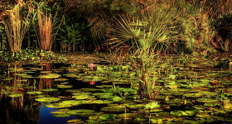 The Lily Pond 55.jpg