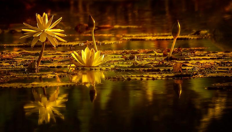 The Lily Pond 70.jpg