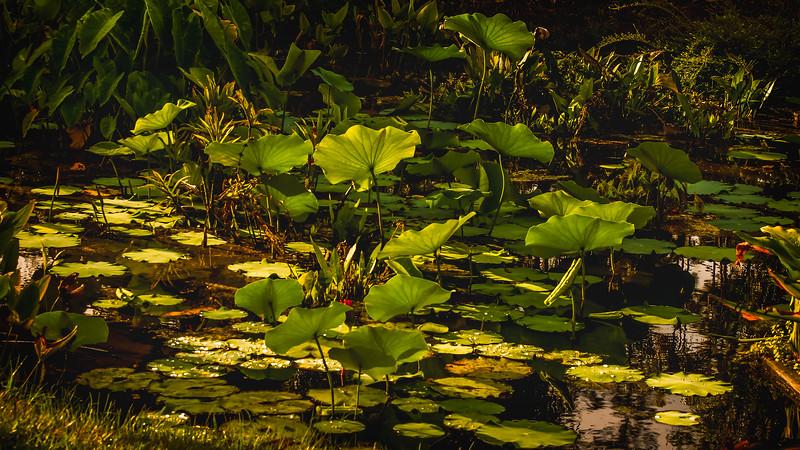 The Lily Pond 75.jpg