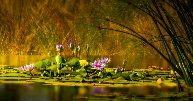 The Lily Pond 49.jpg