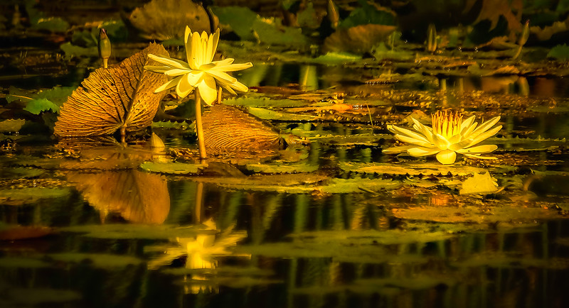 The Lily Pond 69.jpg