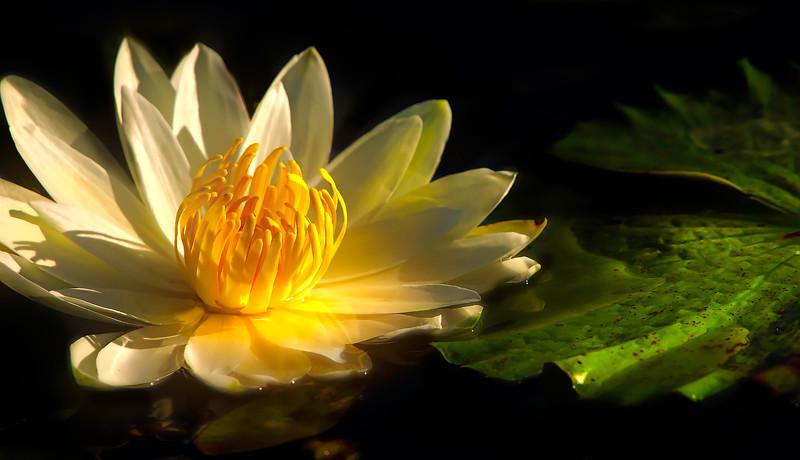 The Lily Pond 95.jpg