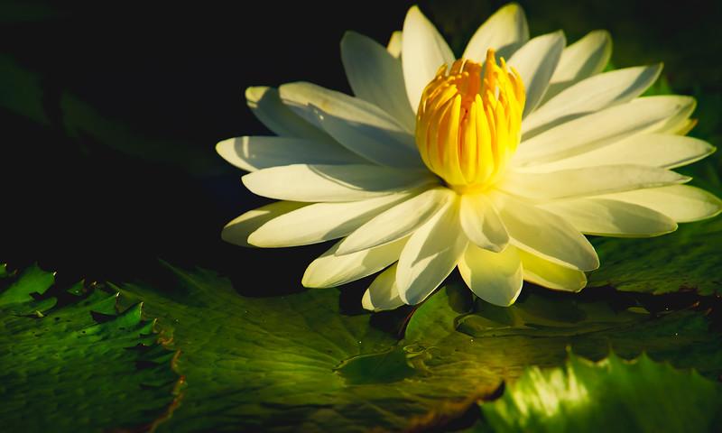 The Lily Pond 83.jpg