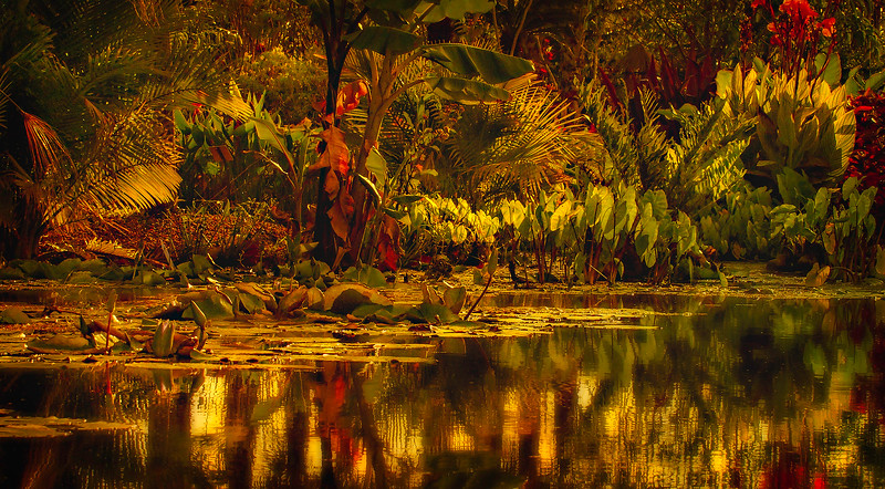 The Lily Pond 71.jpg