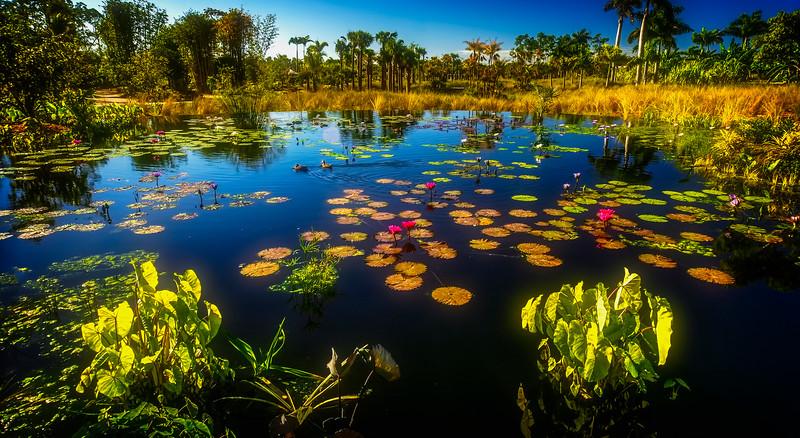 The Lily Pond 1.jpg
