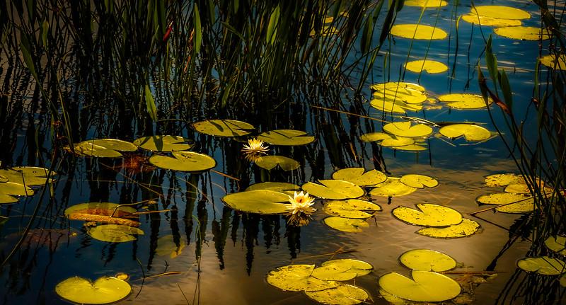 The Lily Pond 31.jpg