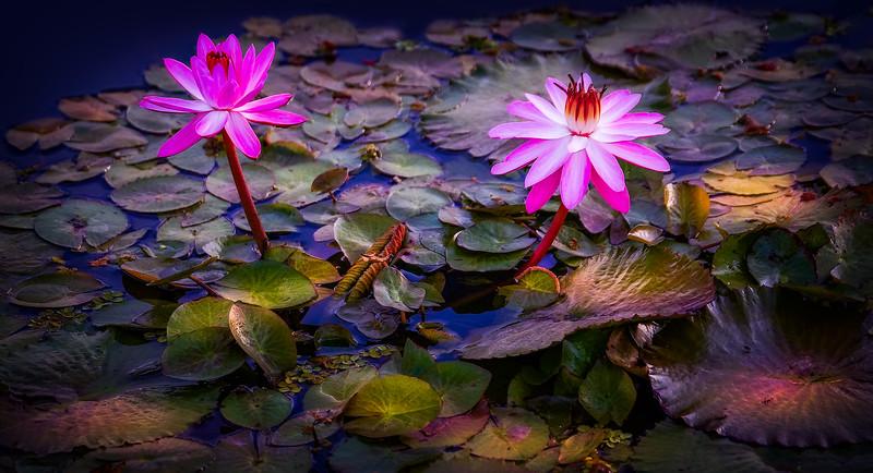 The Lily Pond 65.jpg