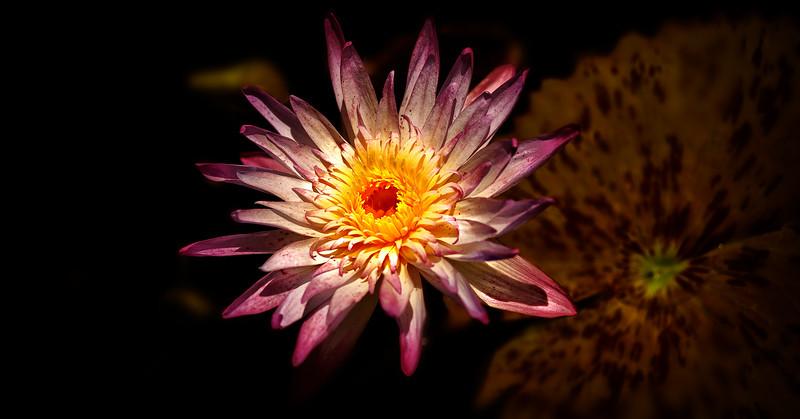 The Lily Pond 21.jpg