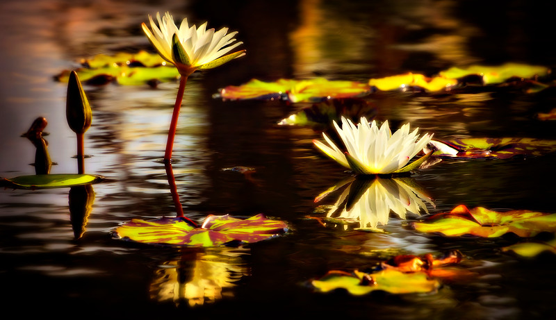 The Lily Pond 18.jpg
