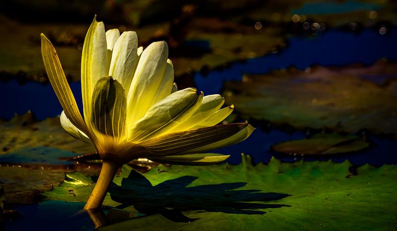 The Lily Pond 87.jpg
