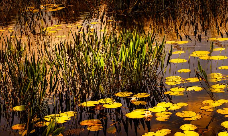 The Lily Pond 27.jpg