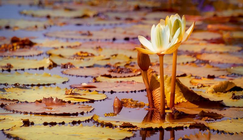The Lily Pond 78.jpg