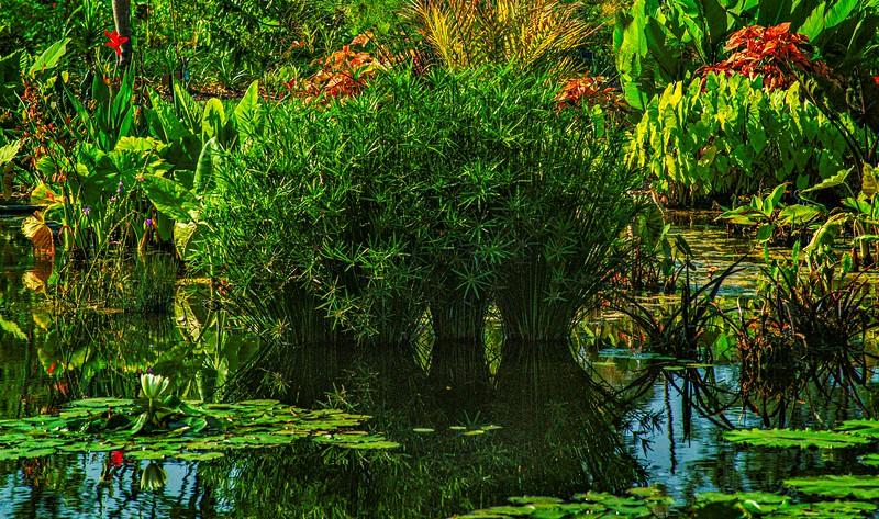 The Lily Pond 39.jpg