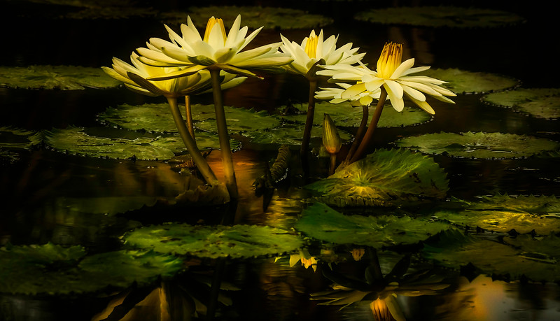 The Lily Pond 20.jpg