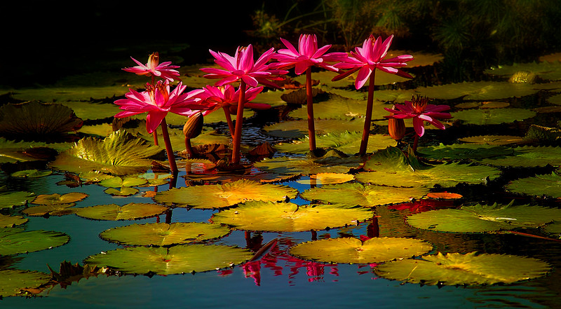 The Lily Pond by Ray Bilcliff - www.trueportraits.com