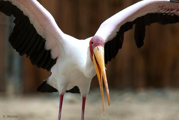 """I said """"Stork"""" not """"Dork"""" my friend..."""