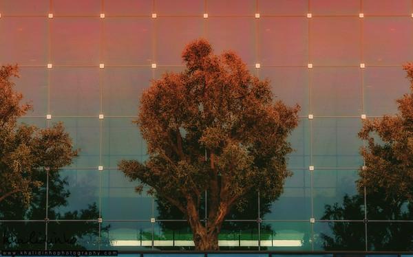 Unfamiliar Tree