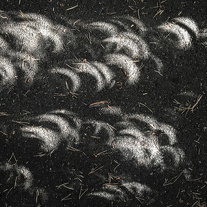 Shadows of the Eclipse