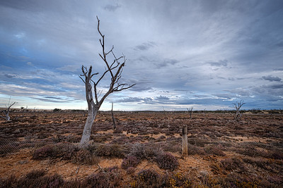 Salt affected land in the Mallee, Victoria, 2018