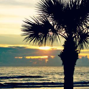 Palm Tree Sun Rise